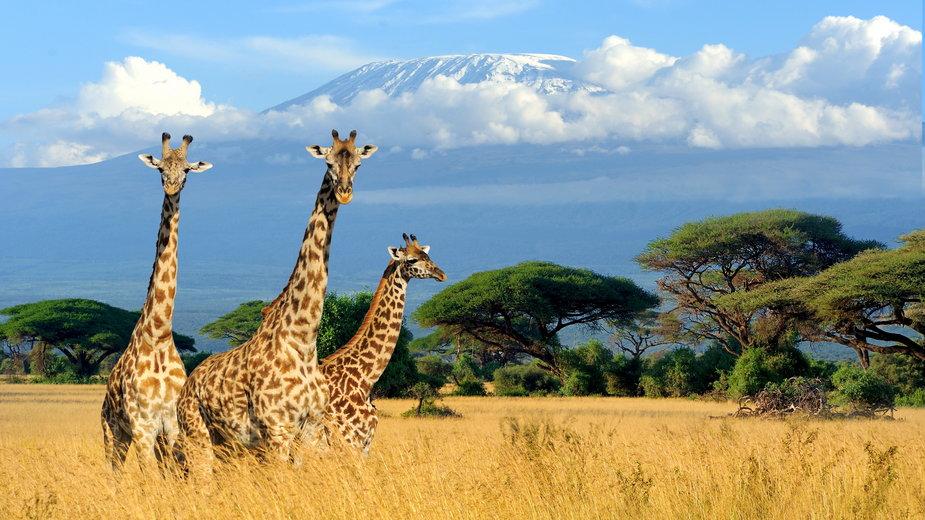 Afryka - informacje, regiony, pustynie. Gdzie jechać na wakacje?
