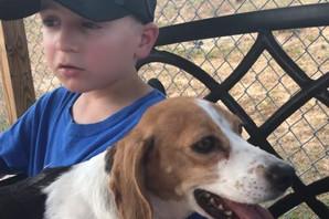HEROJ PASA I MAČAKA Ovaj dečak ima samo sedam godina i već je preko 1.400 životinja SPASAO OD SMRTI (VIDEO)