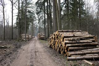 Pomniki przyrody przerabiane na deski. W sprawie Puszczy Białowieskiej naukowcy-przyrodnicy piszą list do premiera Morawieckiego