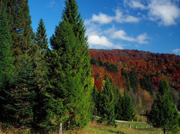 Wydzielenie 219a znajduje się na obszarze Natura 2000 Bieszczady PLC180001