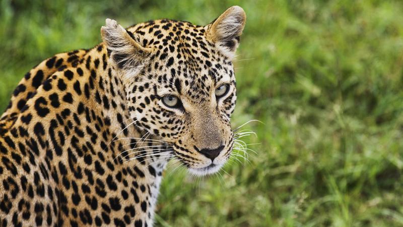 Leopárd társa társkereső weboldal életrajz