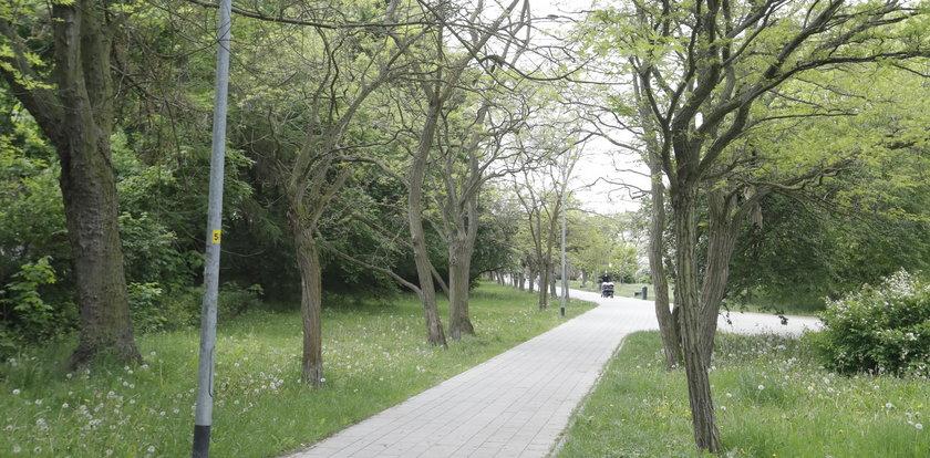Kwitnące wiśnie nie tylko w Japonii! Niezwykła inwestycja w Gdańsku. Wybrali ją mieszkańcy