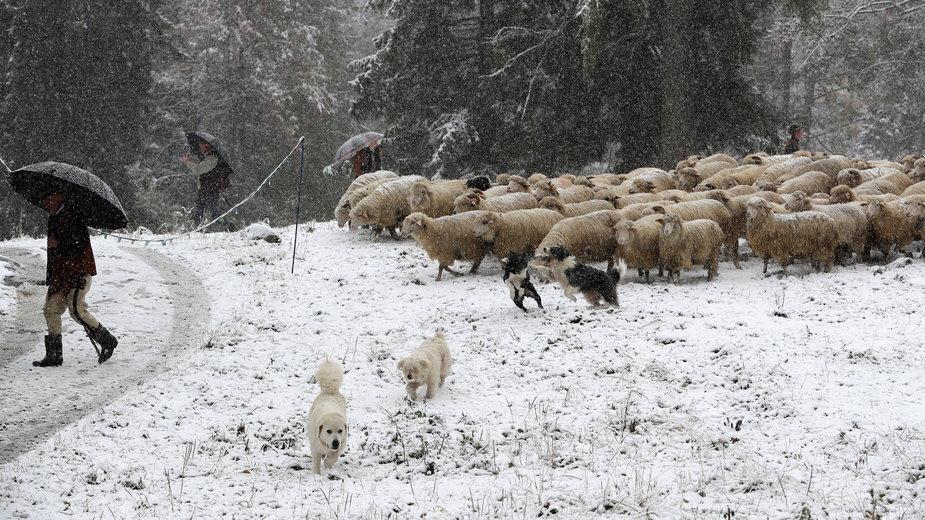 Zima zaatakowała w Zakopanem