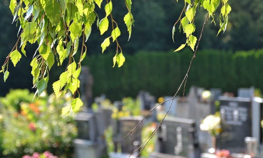 Biała Podlaska: ktoś truje drzewa na cmentarzu. Wlewa chemię