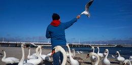 Alarm, ptasia grypa w Sopocie. Uważaj na te zakazy!