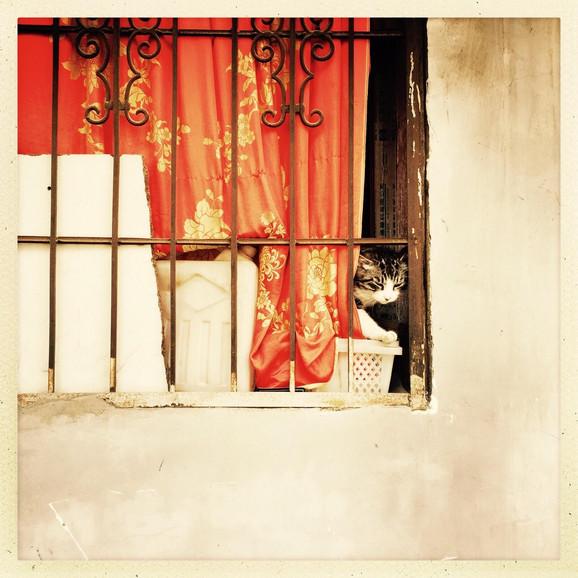 U Vuhanu je gomila ljubimaca ostala zarobljena u stanovima usred epidemije