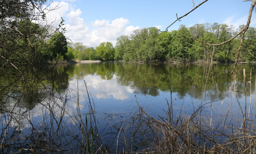 W okolicy stawów żyje około 100 gatunków ptaków wodno-błotnych.