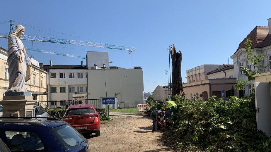 Zniszczony pomnik przyrody przy ul. Staszica