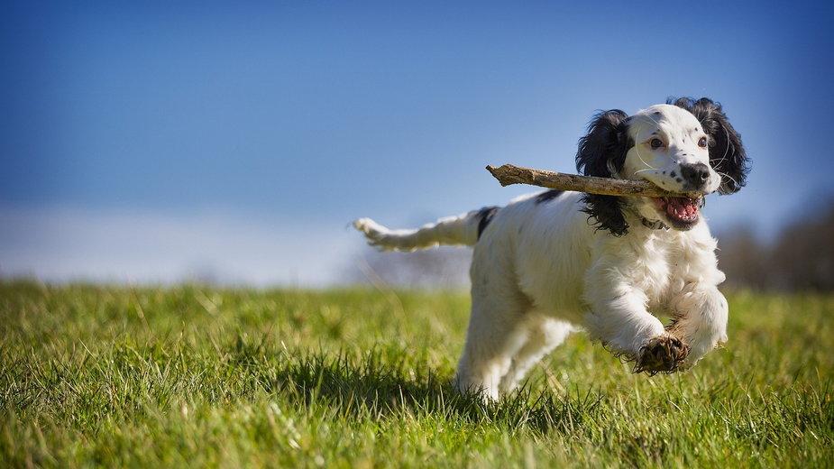 Przed nauką sztuczek należy nauczyć psa posłuszeństwa - DaveFrancis/pixabay.com