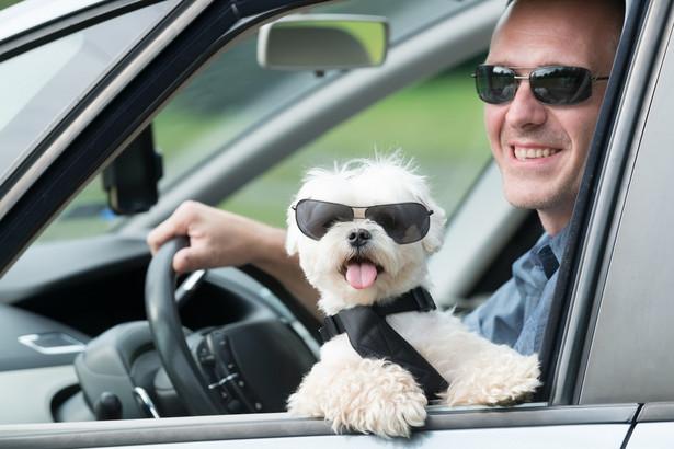 Łączna liczba zwierząt domowych (psów, kotów, fretek) w jednej podróży pomiędzy krajami UE może wynieść maksymalnie pięć.