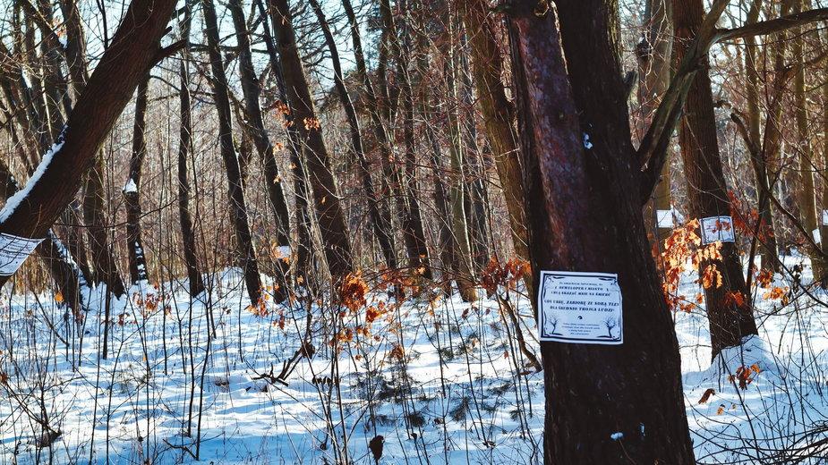 Na drzewach w pasie nadmorskim zawisły takie plakaty