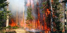 Pożar lasu pod Warszawą