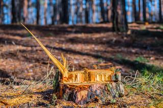 TK: Kompetencje województwa w zakresie kar i opłat za usuwanie drzew i krzewów - zgodne z konstytucją