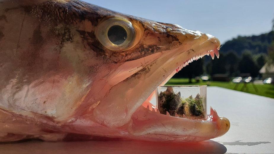 Najmniejsze akwarium świata, stworzone przez Marcina Zająca