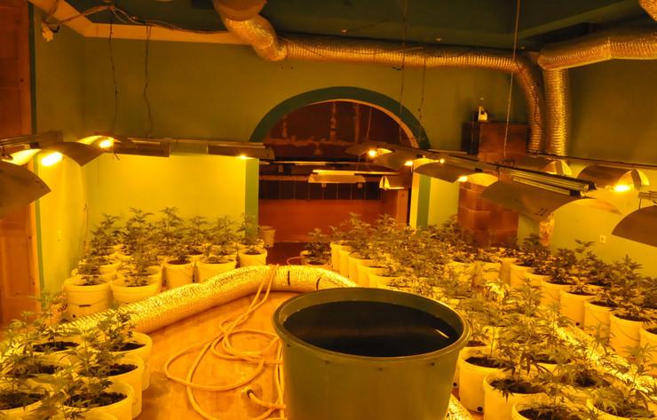 Laboratorija za uzgoj marihuane u Novom Sadu