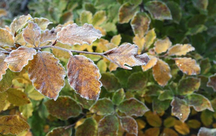 Koniec ciepłej jesieni.