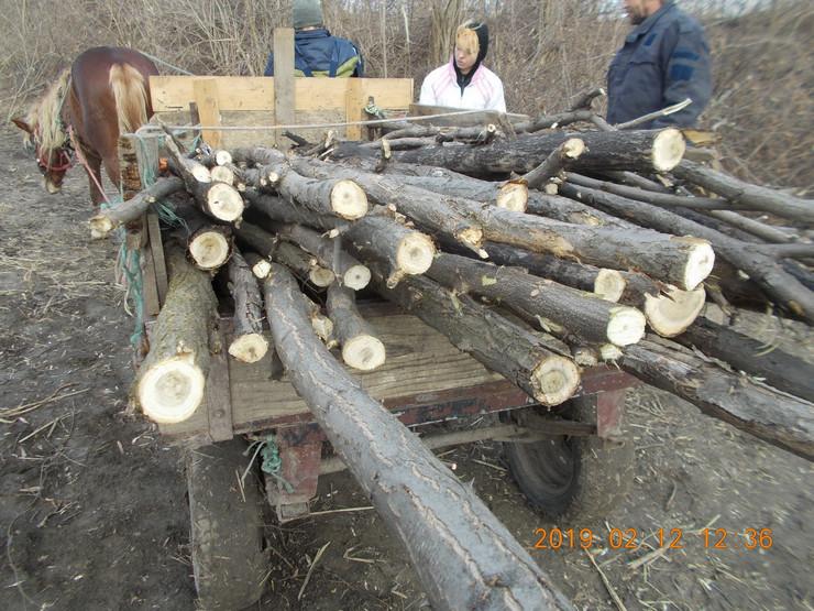 Senta - Za prevoz ukradenih drva koriste se i zaprege