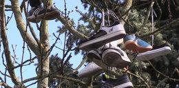 Drzewo sandałowe w Szkole Policji