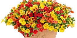 Oto kwiatowe hity na balkon!