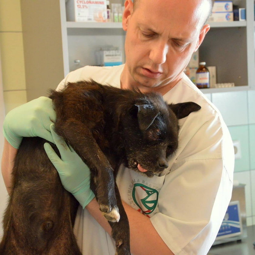 """Skatowany pies """"Oczko"""" jest przykładem bestialskiego znęcania się nad zwierzętami"""