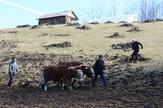 Loznica01 pantelicima 14 srebrni pastir scena iz dokumentarnog filma foto d.pantelic
