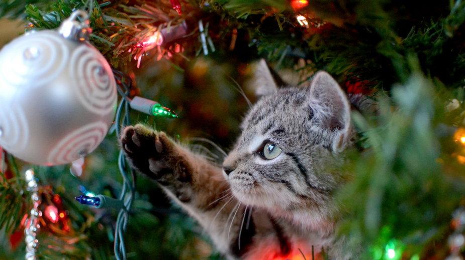 Pięć rzeczy, które twój kot musi zrobić w święta!