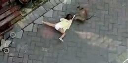 Nieprawdopodobne! Małpa na motorze próbowała porwać dziecko [FILM]