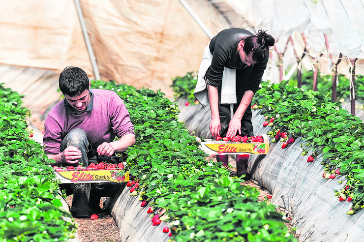 subvencije poljoprivreda -395537266