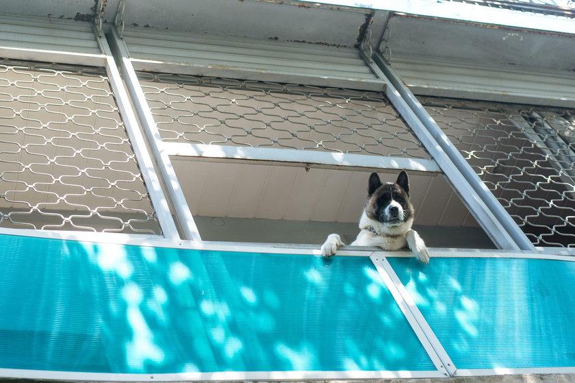 Zamkniecie psa w upał na balkonie to znęcanie się nad zwierzętami
