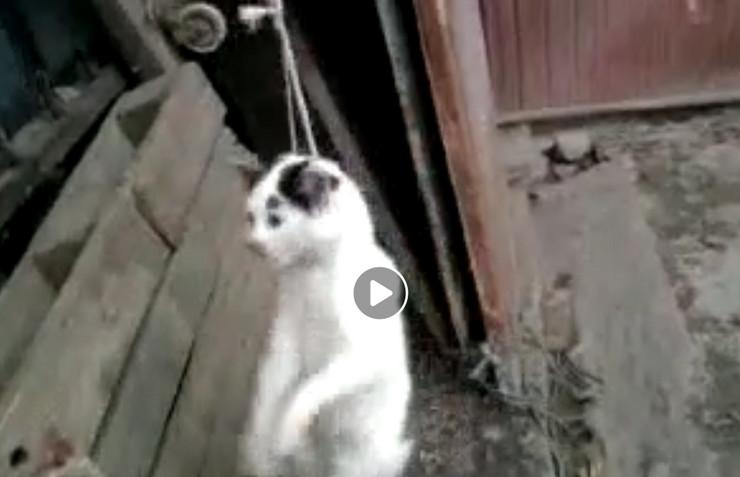 obešena mačka