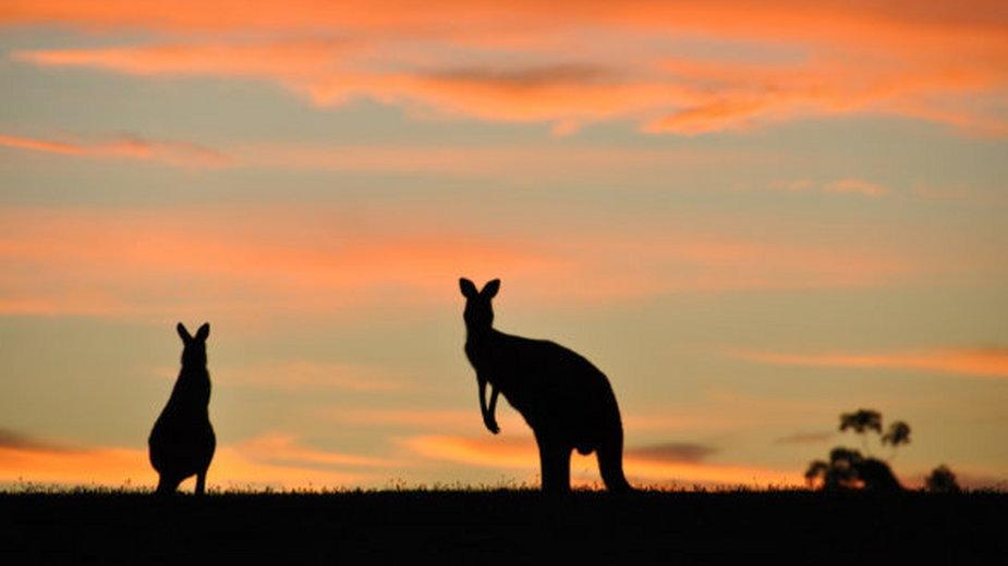Krajobraz Australii. Fot. Flickr