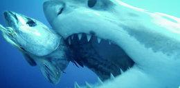 Oko w oko z żarłaczem białym! [FILM]