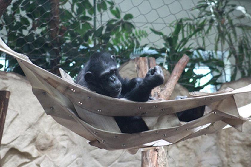 Upał w zoo