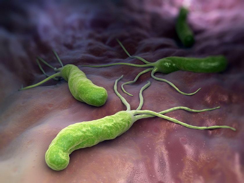 Za powstawanie wrzodów w ponad 90 proc. przypadków odpowiada bakteria Helicobacter pylori