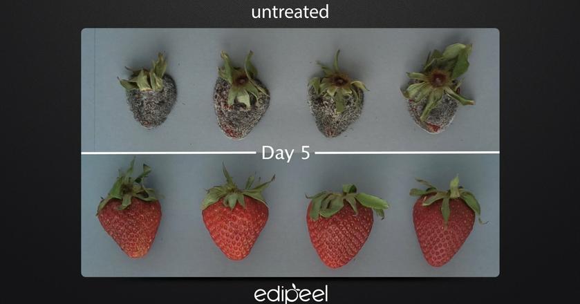 Owoce i warzywa pokryte niewidzialną jadalną warstwą wytrzymają w lodówce nawet 5 razy dłużej