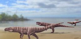 Szokujące odkrycie! Starożytny krokodyl chodził na dwóch nogach?