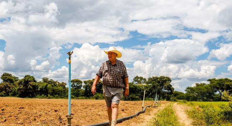 A white farmer in Zimbabwe. (foreignpolicy)