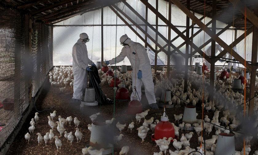 Chiny: rośnie liczba zakażonych brucelozą po wycieku bakterii z fabryki