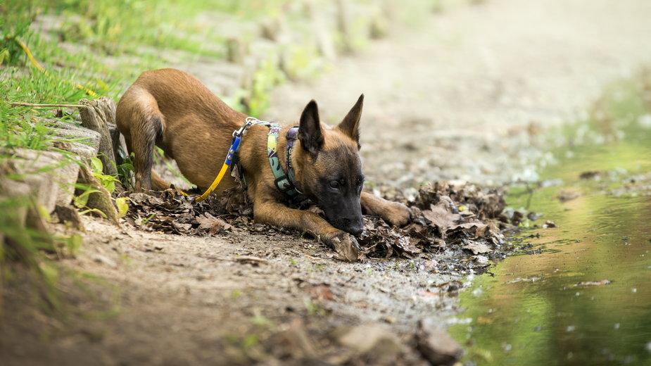 Zabawa z psem powinna być bezpieczna dla zwierzęcia i opiekuna - nitka_zaplatana/stock.adobe.com