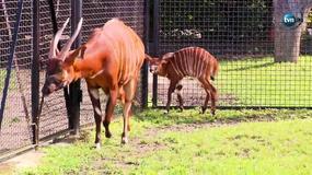 Lato narodzin. Warszawskie zoo zyskało wielu nowych mieszkańców