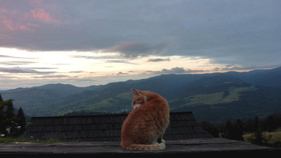 Kot z Durbaszki