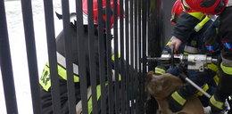 Strażacy uratowali sarenkę, a ta im nie podziękowała