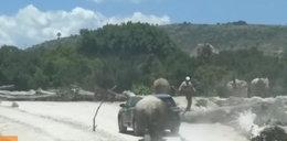 Atak nosorożca na auto z turystami. FILM!