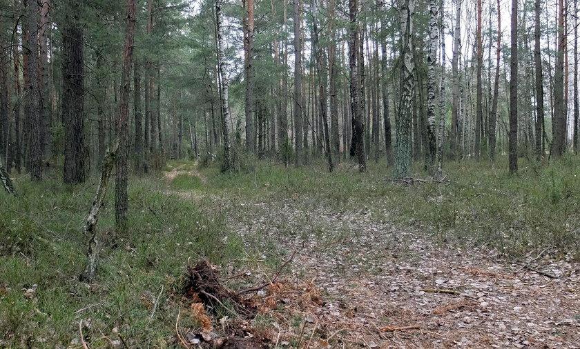 Porwał 7-latka i zaciągnął do lasu... Co się wydarzyło w Garwolinie?