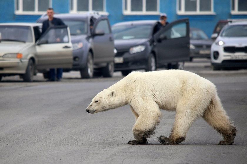 Siarczyste mrozy w Rosji. Zimniej niż na Antarktydzie
