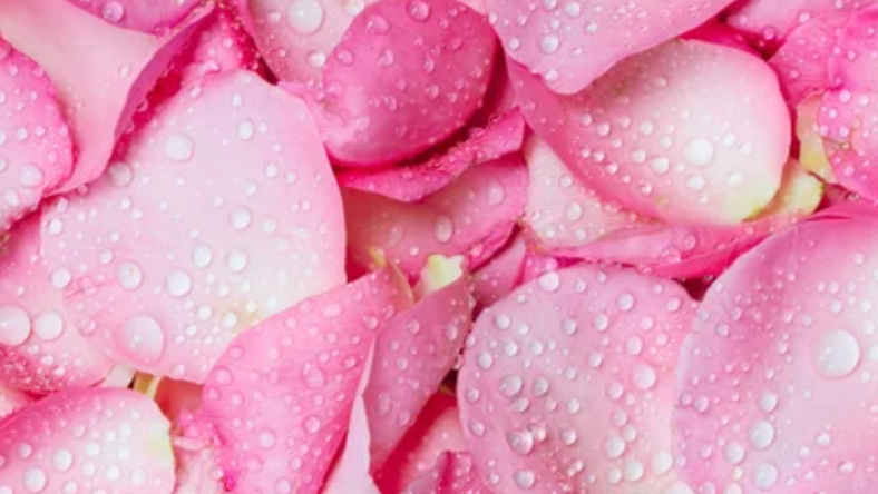 Discover the 5 beauty benefits of rose water today