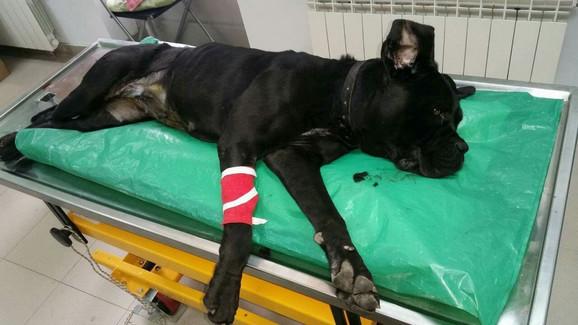 Nada je preživela tumor zahvaljujući Dušanu