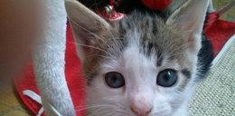 Kociak Sam szuka domu