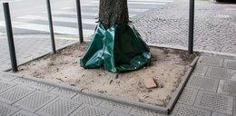 Tak podlewają drzewa. Nowy sposób!
