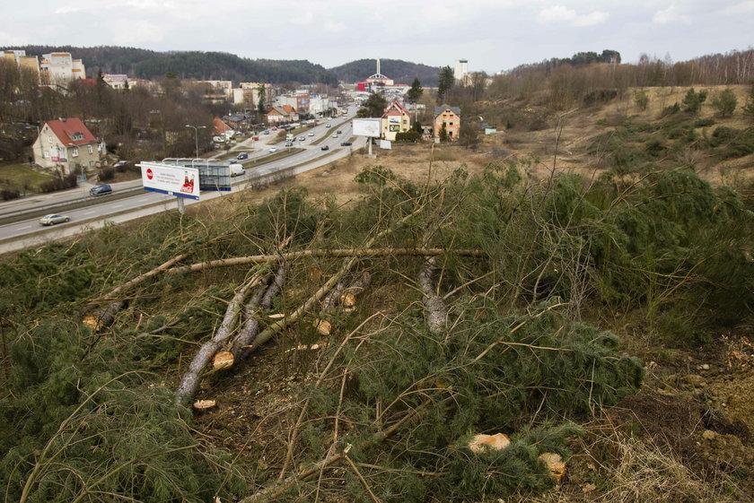 Kontrowersyjna wycinka drzew